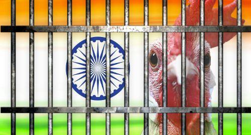 """Индийската полиция """"арестува"""" петли, тъй като забраната за боеве с тези животни няма успех"""